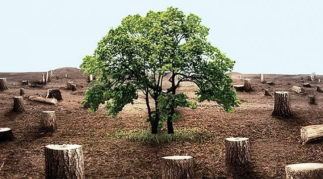 Yılbaşı Ağaçları İçin Kritik Uyarı: 10 Yıla Kadar Hapis Cezası