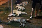 Sokak Hayvanlarını Zehirleyerek Öldürenler İçin Verilen Hapis Kararının Gerekçesi