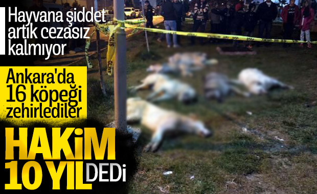 Sokak Hayvanlarının Zehirlenmesine 10 Yıl Hapis Cezası Verildi